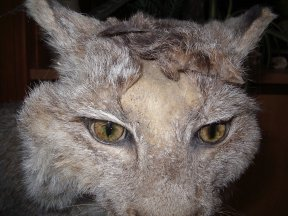 taxidermie, protection des collections