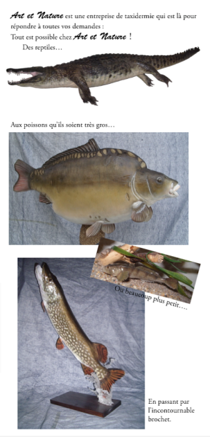taxidermie poissons